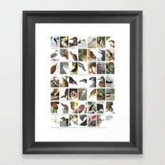 Birds of America Framed Art Print