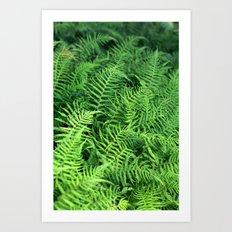 Layers of Ferns Art Print