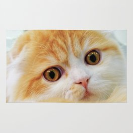 Young Scottish Fold cat Rug