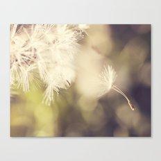 Broken Dandelion, Bokeh Canvas Print