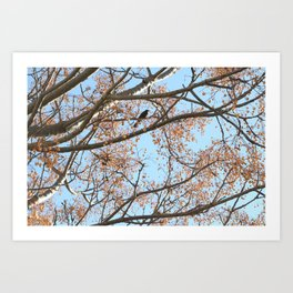 Rowan tree branches with berries and bird Art Print