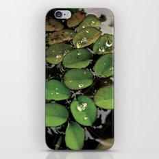 Mini Water Lilies and Water Bug iPhone & iPod Skin