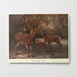 Vintage Virginia Deer Painting (1909) Metal Print