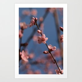 Pure Spring Yeah Art Print