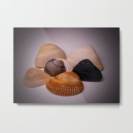 Different color shell Metal Print