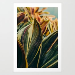 Summer Leaves Art Print