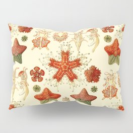 Ernst Haeckel - Scientific Illustration - Asteroidea Pillow Sham