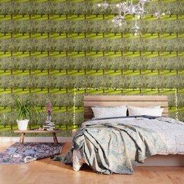 Flowering Apple Trees Wallpaper