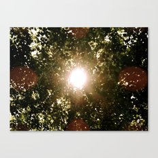 Twinkle Canvas Print