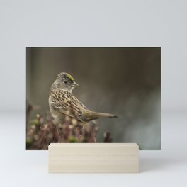 Golden-crowned Sparrow Mini Art Print