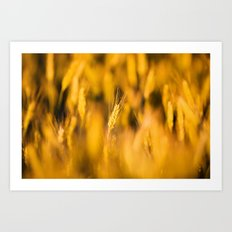 Golden Wheat Art Print
