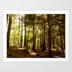 Woodland Serenity Art Print