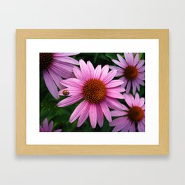 Lady Echinacea Framed Art Print