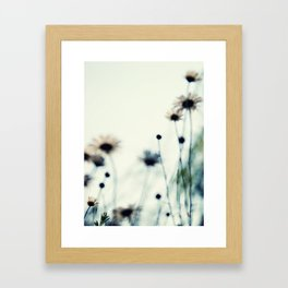 field of daisies Framed Art Print