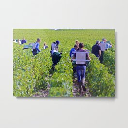 Chateau Margaux-2013 Harvest 1 Metal Print