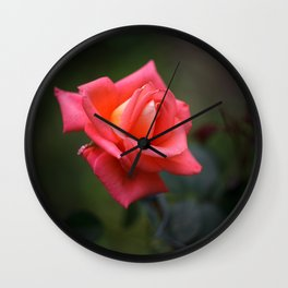 Red rose on a dark background Wall Clock