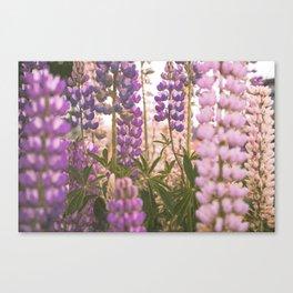 Lupine Flower Dreams Canvas Print