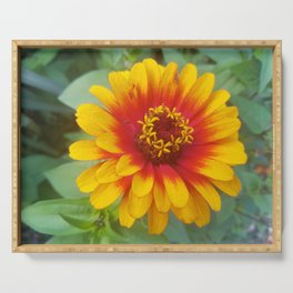 Zinnia on fire Serving Tray