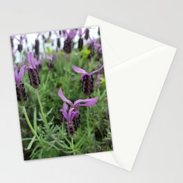 Lavender flower  blooming in the garden of Hamdeok restaurant, Jeju. korea Stationery Cards