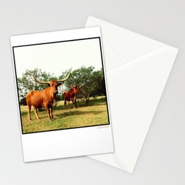 Longhorn Stationery Cards