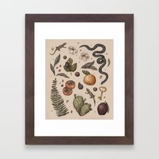 Florida Nature Walks Framed Art Print