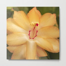Christmas Cactus Flower Metal Print