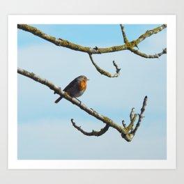 Robin profile Art Print