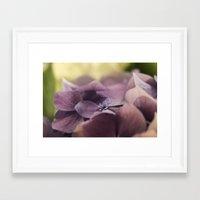 hydrangea Framed Art Prints featuring Hydrangea by Deborah Janke