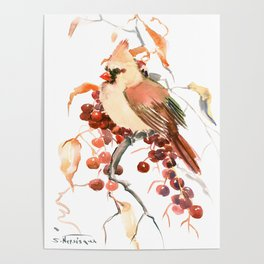 Cardinal and Berries Poster