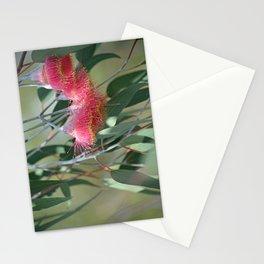Eucalyptus Silver Princess Blossoms I Stationery Cards
