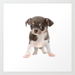 Chihuahua puppy standing Art Print