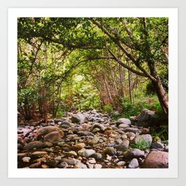 Dry Creek Bed on the West Fork Art Print
