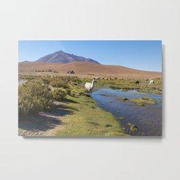 Llamas on an amazing lake nature landscape in South America. lamas. Metal Print