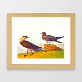 Richardson's Jager Bird Framed Art Print