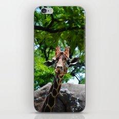 At the Zoo iPhone & iPod Skin