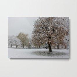 Public Garden snow Metal Print