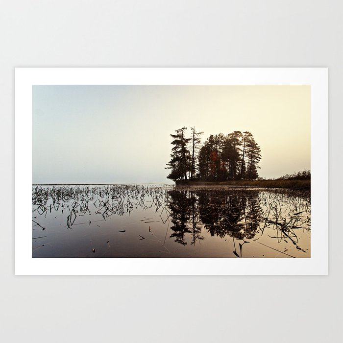 a stand of trees Art Print