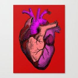 Valentine Anatomy Heart Canvas Print
