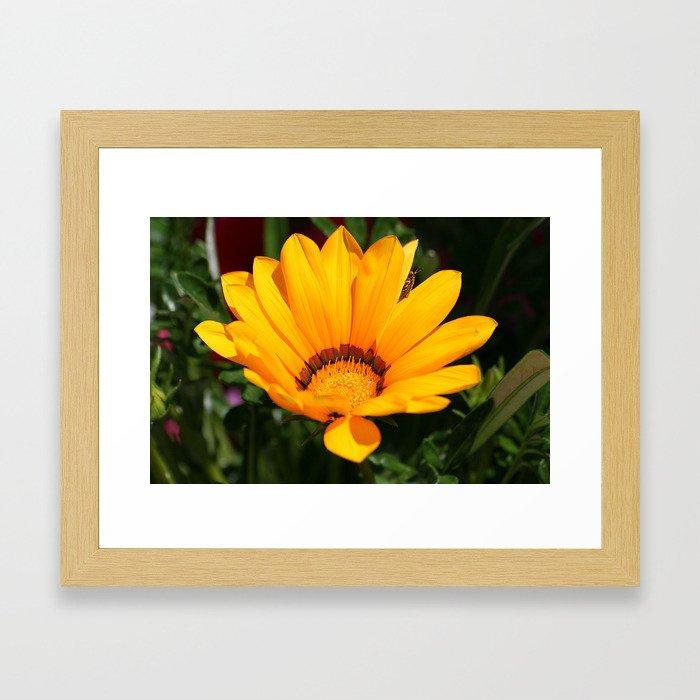 Sunbathing 1 Framed Art Print