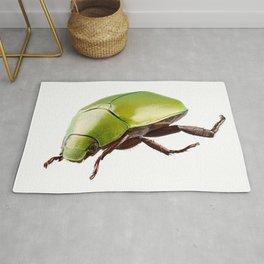 Green beetle species Anomala dimidiata Rug
