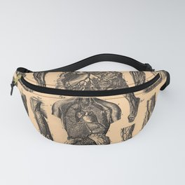 Iconographic Encyclopedia of Science, Literature and Art (1851): Anatomy of the circulatory system 1 Fanny Pack
