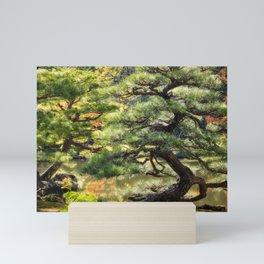 Sculptural pine trees in a Zen Garden in Kyoto. Mini Art Print