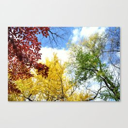 Trees Are... Canvas Print