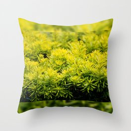 Taxus baccata Yew new shoots Throw Pillow