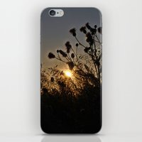 sublime iPhone & iPod Skins featuring Sublime by Dorothy Pinder