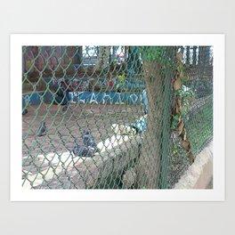 pidgeons and hobos Art Print