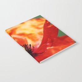 mohn Notebook