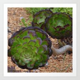 succulent depth Art Print