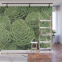 Succulents | Aeoniums | Garden Plants | Pot Plants | Wall Mural