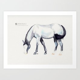 Blue Roan Art Print